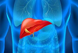 LEBER & Bauchspeicheldrüse – Überlastung & richtige Entgiftung